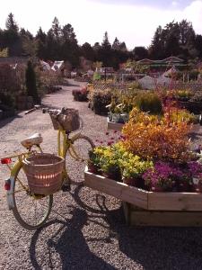 trip to the garden center 069