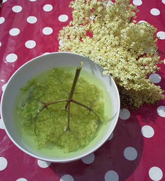 elderberry tea 2014-06-05 015