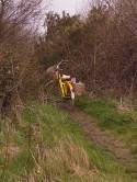 daffodil time 027